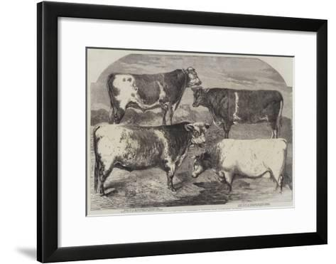 Prize Shorthorns at the Royal Agricultural Society's Show, Canterbury-Harrison William Weir-Framed Art Print