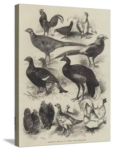 Exhibition of Game Birds and Bantams at the Crystal Palace-Harrison William Weir-Stretched Canvas Print