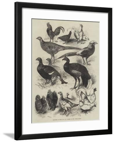 Exhibition of Game Birds and Bantams at the Crystal Palace-Harrison William Weir-Framed Art Print
