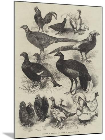 Exhibition of Game Birds and Bantams at the Crystal Palace-Harrison William Weir-Mounted Giclee Print
