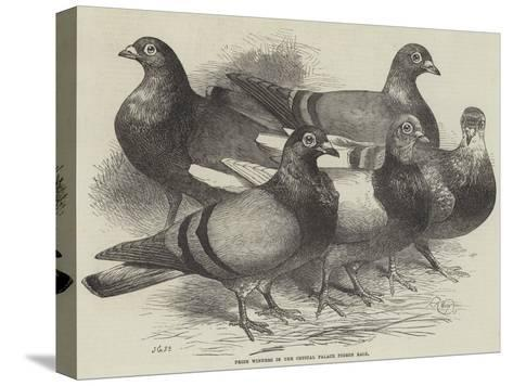 Prize Winners in the Crystal Palace Pigeon Race-Harrison William Weir-Stretched Canvas Print