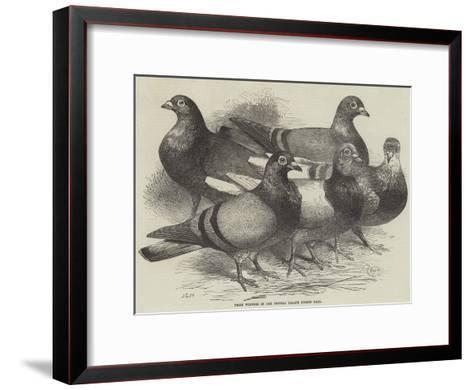 Prize Winners in the Crystal Palace Pigeon Race-Harrison William Weir-Framed Art Print
