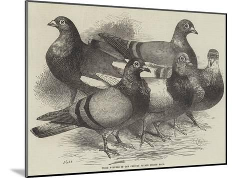 Prize Winners in the Crystal Palace Pigeon Race-Harrison William Weir-Mounted Giclee Print