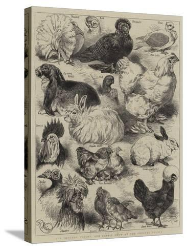 The Poultry, Pigeon, and Rabbit Show at the Crystal Palace-Harrison William Weir-Stretched Canvas Print