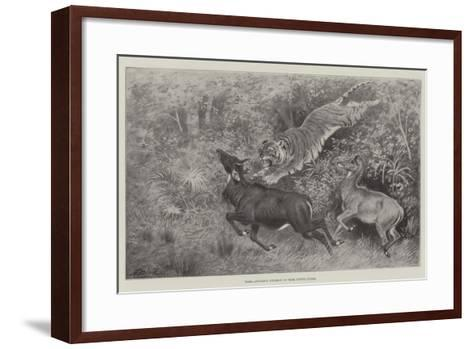 Tiger Attacking Nylghaie in their Native Jungle-Harrington Bird-Framed Art Print