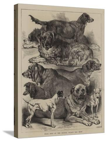 Prize Dogs at the Crystal Palace Dog Show-Harrison William Weir-Stretched Canvas Print