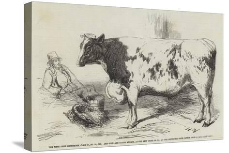 The First Prize Shorthorn-Harrison William Weir-Stretched Canvas Print