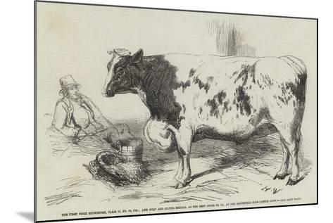 The First Prize Shorthorn-Harrison William Weir-Mounted Giclee Print