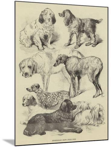 Birmingham Show, Prize Dogs-Harrison William Weir-Mounted Giclee Print
