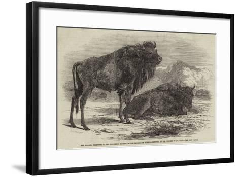 The Aurochs Presented to the Zoological Society, by the Emperor of Russia-Harrison William Weir-Framed Art Print