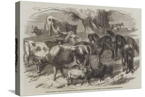 Dwarf African Ponies and Bretonne Cows and Sheep Exhibited at the Crystal Palace, Sydenham-Harrison William Weir-Stretched Canvas Print
