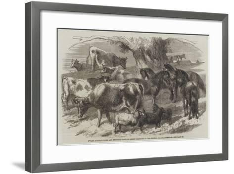 Dwarf African Ponies and Bretonne Cows and Sheep Exhibited at the Crystal Palace, Sydenham-Harrison William Weir-Framed Art Print