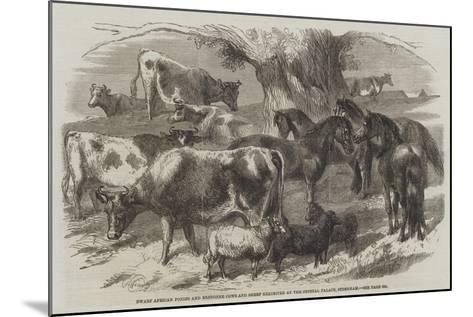 Dwarf African Ponies and Bretonne Cows and Sheep Exhibited at the Crystal Palace, Sydenham-Harrison William Weir-Mounted Giclee Print