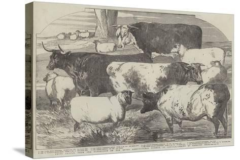 Prize Cattle, from the Exhibition of the Royal Agricultural Society, at Lincoln-Harrison William Weir-Stretched Canvas Print