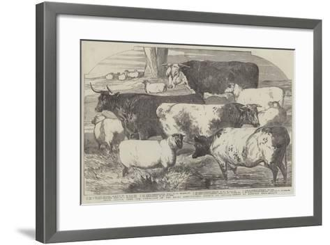 Prize Cattle, from the Exhibition of the Royal Agricultural Society, at Lincoln-Harrison William Weir-Framed Art Print