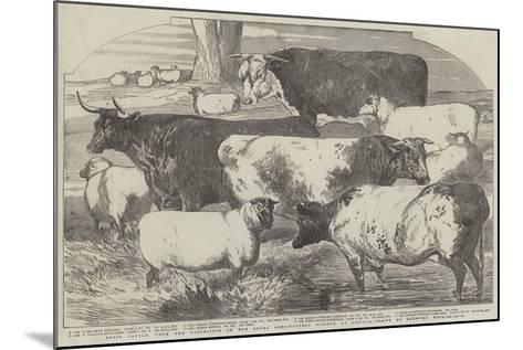 Prize Cattle, from the Exhibition of the Royal Agricultural Society, at Lincoln-Harrison William Weir-Mounted Giclee Print