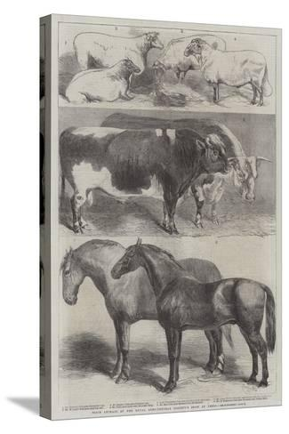 Prize Animals at the Royal Agricultural Society's Show at Leeds-Harrison William Weir-Stretched Canvas Print