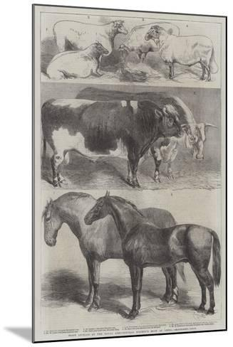 Prize Animals at the Royal Agricultural Society's Show at Leeds-Harrison William Weir-Mounted Giclee Print