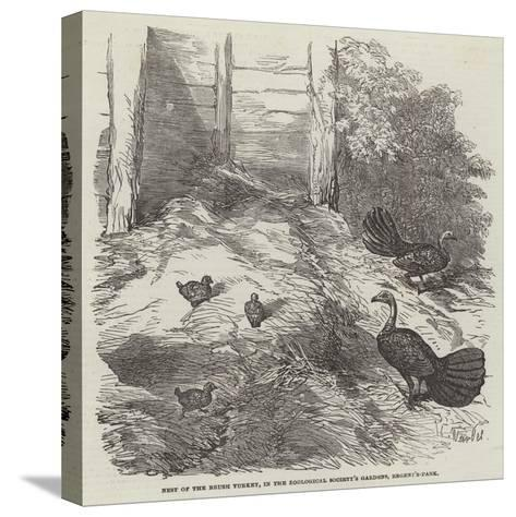 Nest of the Brush Turkey, in the Zoological Society's Gardens, Regent'S-Park-Harrison William Weir-Stretched Canvas Print