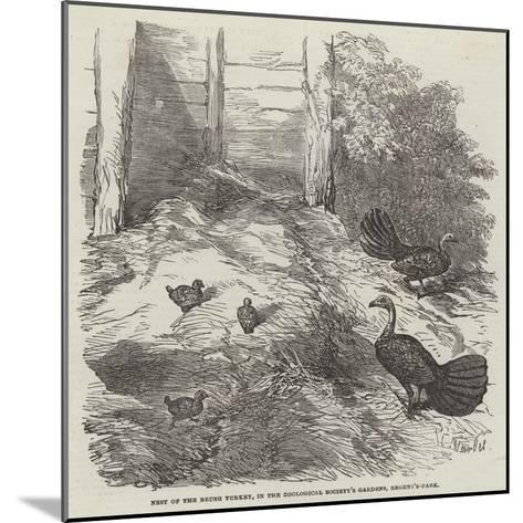 Nest of the Brush Turkey, in the Zoological Society's Gardens, Regent'S-Park-Harrison William Weir-Mounted Giclee Print