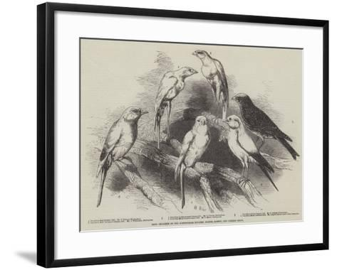 Prize Canaries at the Nottingham Poultry, Pigeon, Rabbit, and Canary Show-Harrison William Weir-Framed Art Print