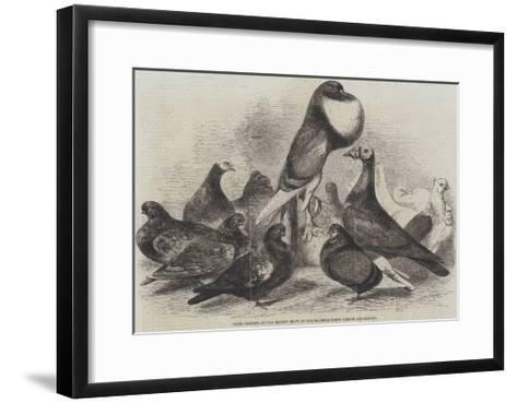Prize Pigeons at the Recent Show of the Halifax Fancy Pigeon Association-Harrison William Weir-Framed Art Print