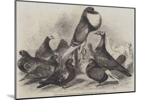 Prize Pigeons at the Recent Show of the Halifax Fancy Pigeon Association-Harrison William Weir-Mounted Giclee Print