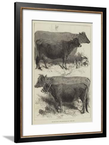 The Dairy Show at the Agricultural Hall, Prize Cows-Harrison William Weir-Framed Art Print