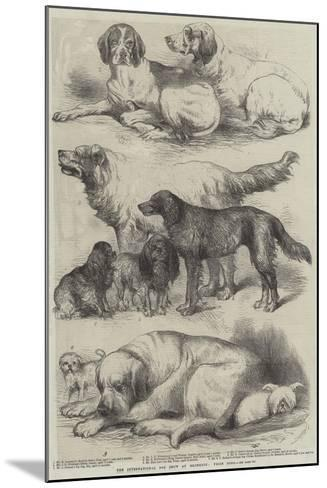 The International Dog Show at Islington, Prize Dogs-Harrison William Weir-Mounted Giclee Print