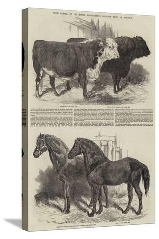 Prize Cattle, at the Royal Agricultural Society's Show, at Norwich-Harrison William Weir-Stretched Canvas Print