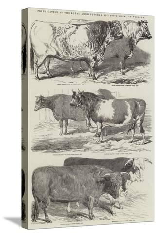 Prize Cattle at the Royal Agricultural Society's Show, at Windsor-Harrison William Weir-Stretched Canvas Print