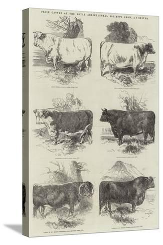 Prize Cattle at the Royal Agricultural Society's Show, at Exeter-Harrison William Weir-Stretched Canvas Print