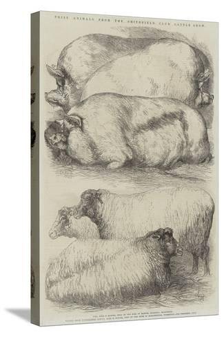 Prize Animals from the Smithfield Club Cattle Show-Harrison William Weir-Stretched Canvas Print