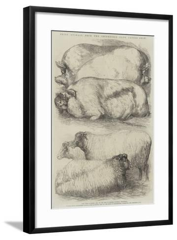 Prize Animals from the Smithfield Club Cattle Show-Harrison William Weir-Framed Art Print