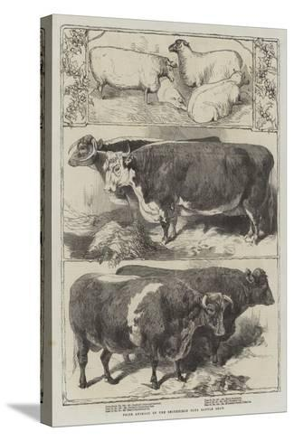 Prize Animals of the Smithfield Club Cattle Show-Harrison William Weir-Stretched Canvas Print