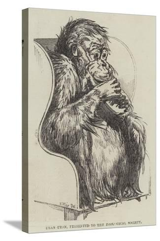 Uran-Utan, Presented to the Zoological Society-Harrison William Weir-Stretched Canvas Print