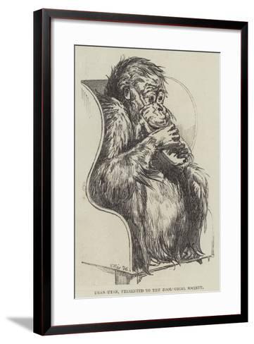 Uran-Utan, Presented to the Zoological Society-Harrison William Weir-Framed Art Print