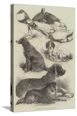 Prize Poultry and Dogs at the Birmingham Show-Harrison William Weir-Stretched Canvas Print