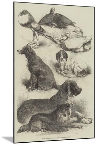 Prize Poultry and Dogs at the Birmingham Show-Harrison William Weir-Mounted Giclee Print