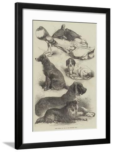 Prize Poultry and Dogs at the Birmingham Show-Harrison William Weir-Framed Art Print