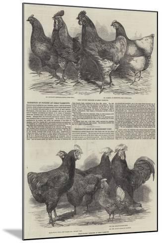 Exhibition of Poultry at Great Yarmouth-Harrison William Weir-Mounted Giclee Print
