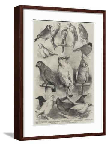 Prize Birds at the Crystal Palace Show-Harrison William Weir-Framed Art Print