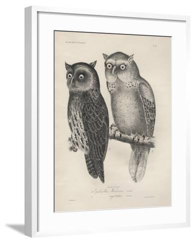1. Ephialtes Watsonii, 2. (Ephialtes) Sagittatus, Litho by J.T. Bowen, 1850-Henry Louis Stephens-Framed Art Print