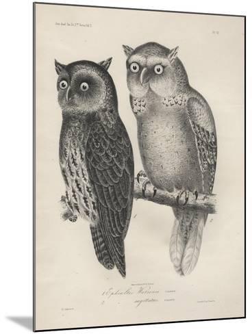 1. Ephialtes Watsonii, 2. (Ephialtes) Sagittatus, Litho by J.T. Bowen, 1850-Henry Louis Stephens-Mounted Giclee Print