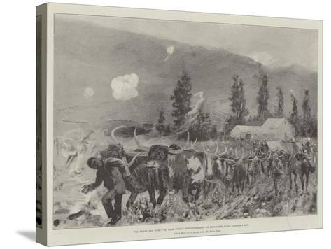The Transvaal War, Ox Team During the Retirement on Ladysmith after Lombard's Kop-Henry Charles Seppings Wright-Stretched Canvas Print