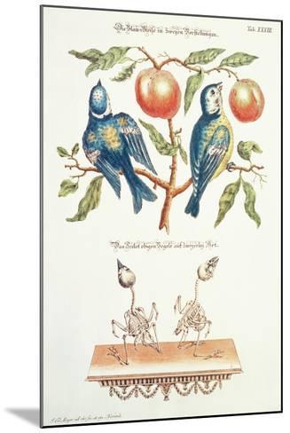 Blue Tits from Angenehmer Und Nutzlicher-J. D. Meyer-Mounted Giclee Print