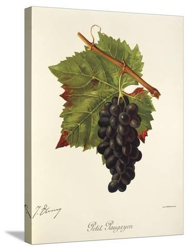 Petit Paugayen Grape-J. Troncy-Stretched Canvas Print