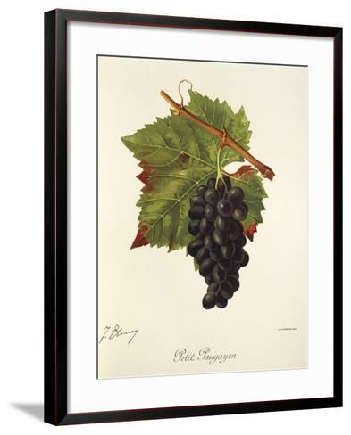 Petit Paugayen Grape-J. Troncy-Framed Art Print