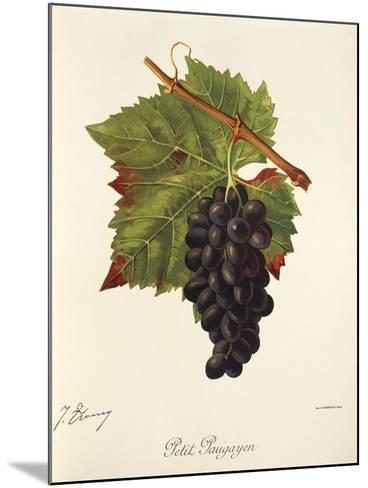 Petit Paugayen Grape-J. Troncy-Mounted Giclee Print