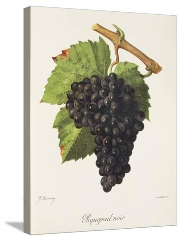 Piquepoul Noir Grape-J. Troncy-Stretched Canvas Print